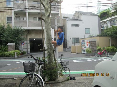 木登り大好きくん!